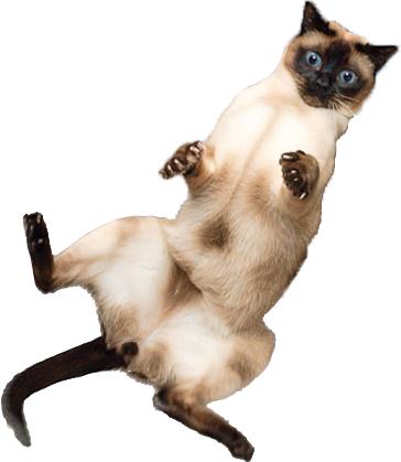tour-back-cat