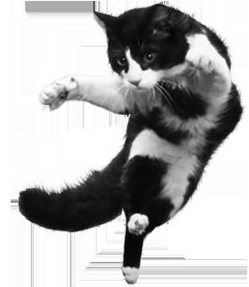 flying-cat